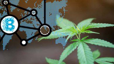 cannabis 3.0