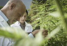 cannabis ardeche gendarmes