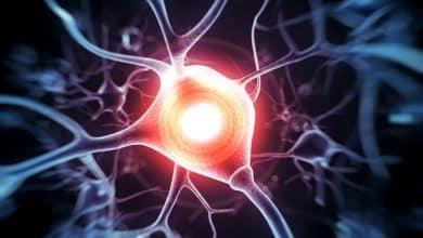 Strict lineage tracing is essential for nerve cellular regeneration studies 6