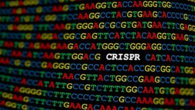 CRISPR/Cas9-directed epigenetic editing reveals diverse transcriptomic regulation and functional effects 4