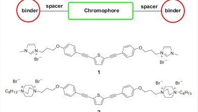 New oligomer shows promising anti-SARS-CoV-2 properties 2