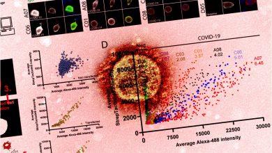 Microscopy-based high content platform for SARS-CoV-2 serological screening 4