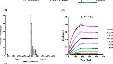 Nasal delivery of single-domain antibodies improves SARS-CoV-2 symptoms in animal model 3