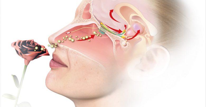 New method to diagnose anosmia 1