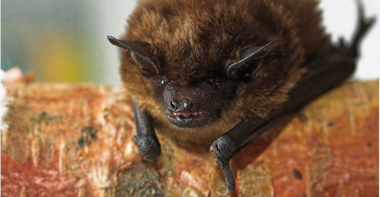 Genetic characteristics of possible new Alphacoronavirus species found in Bats 1