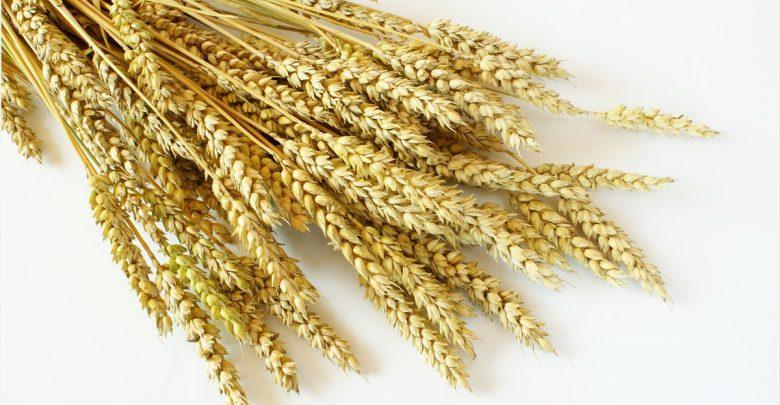 Antiviral activity of Wheat Germ Agglutinin against SARS-CoV-2 1