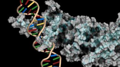 Three U of U Health researchers win the 2021 NIH Director's New Innovator Award 4