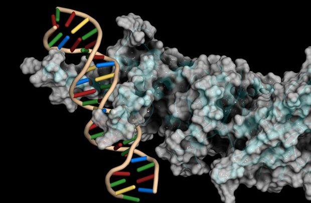 Three U of U Health researchers win the 2021 NIH Director's New Innovator Award 1